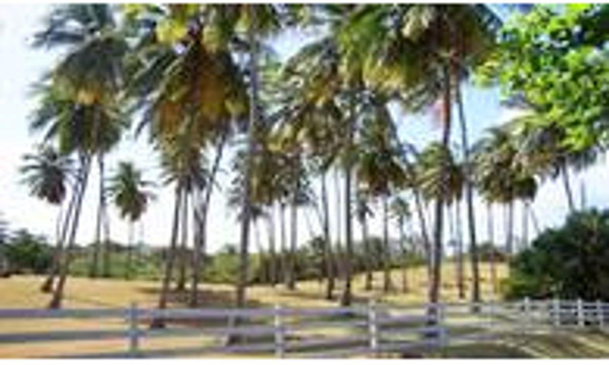 Afbeelding van 'ING, ABN AMRO en Rabobank betrokken bij misstanden palmolie'