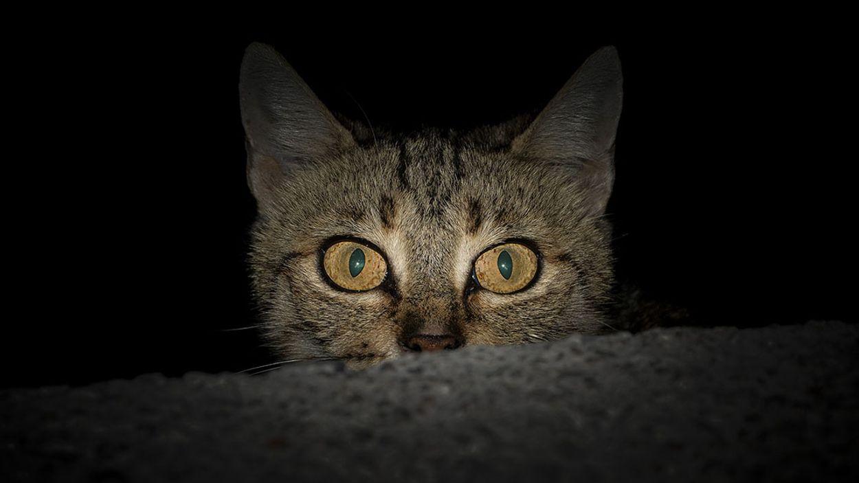 Afbeelding van Help je huisdier oud en nieuw door met deze tips!
