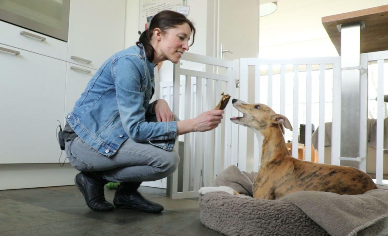 Afbeelding van Hoe kan ik mijn hond zorgeloos alleen laten?