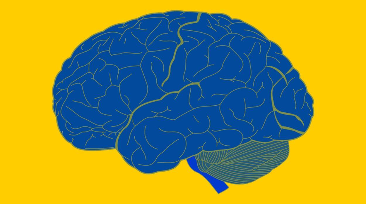 Afbeelding van Jouw inkomen bepaalt de hersengroei van je kind. Dit is hoe!