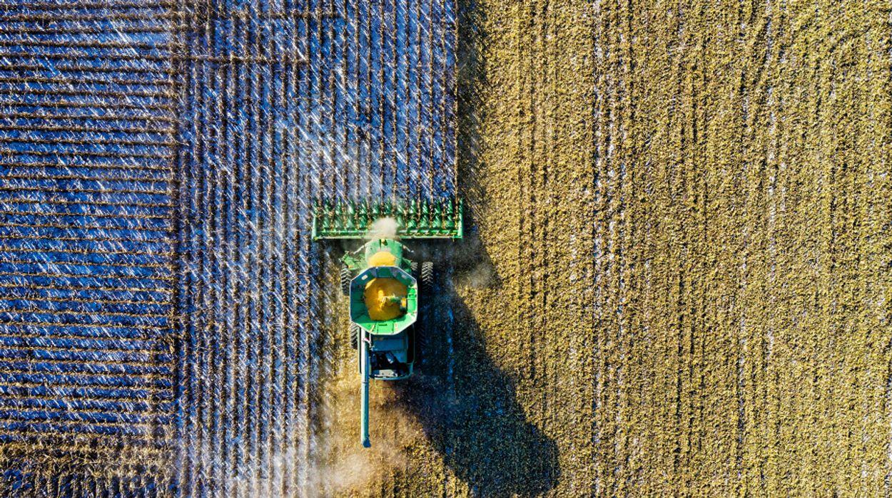 Afbeelding van Nog te vaak chemische middelen bij gewassen
