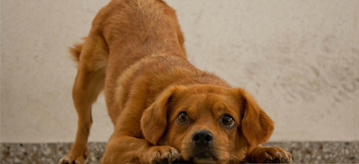 Afbeelding van 'Kind met huisdier ervaart minder angst'
