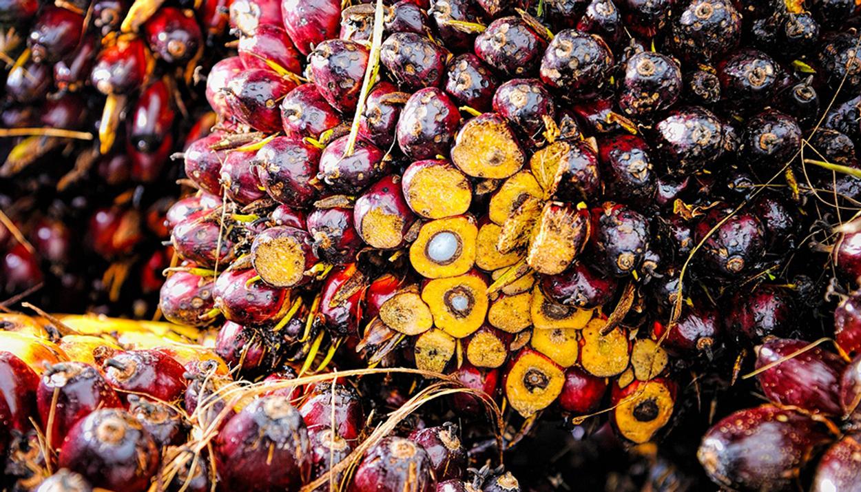 Afbeelding van Nederlanders beleggen via 'duurzame' banken in foute palmoliesector