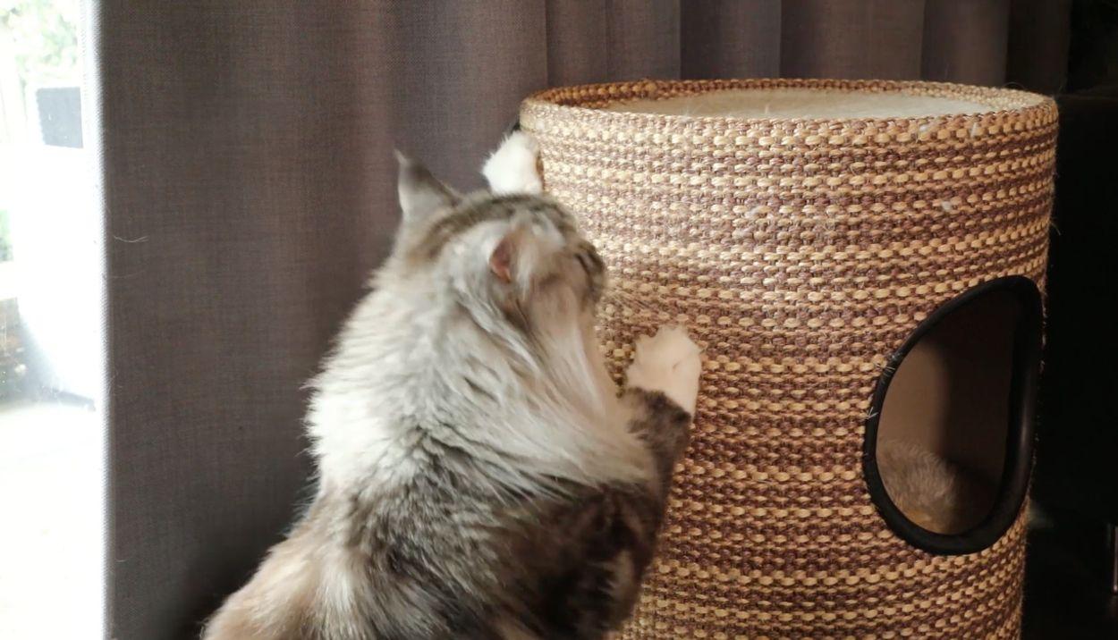 Afbeelding van Hoe zorg ik ervoor dat mijn kat de gordijnen niet kapot krabt?