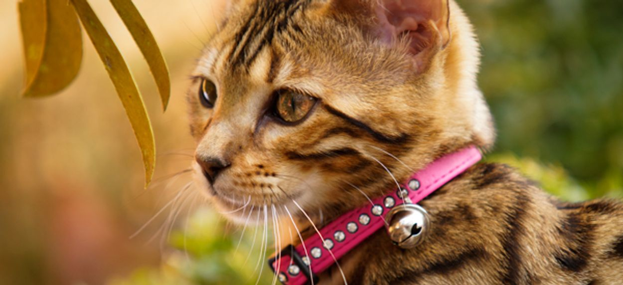 Afbeelding van Luna populairste naam voor hond en kat