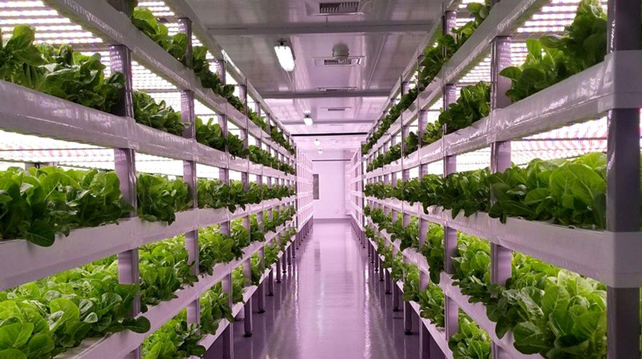 Afbeelding van Is vertical farming de toekomst?