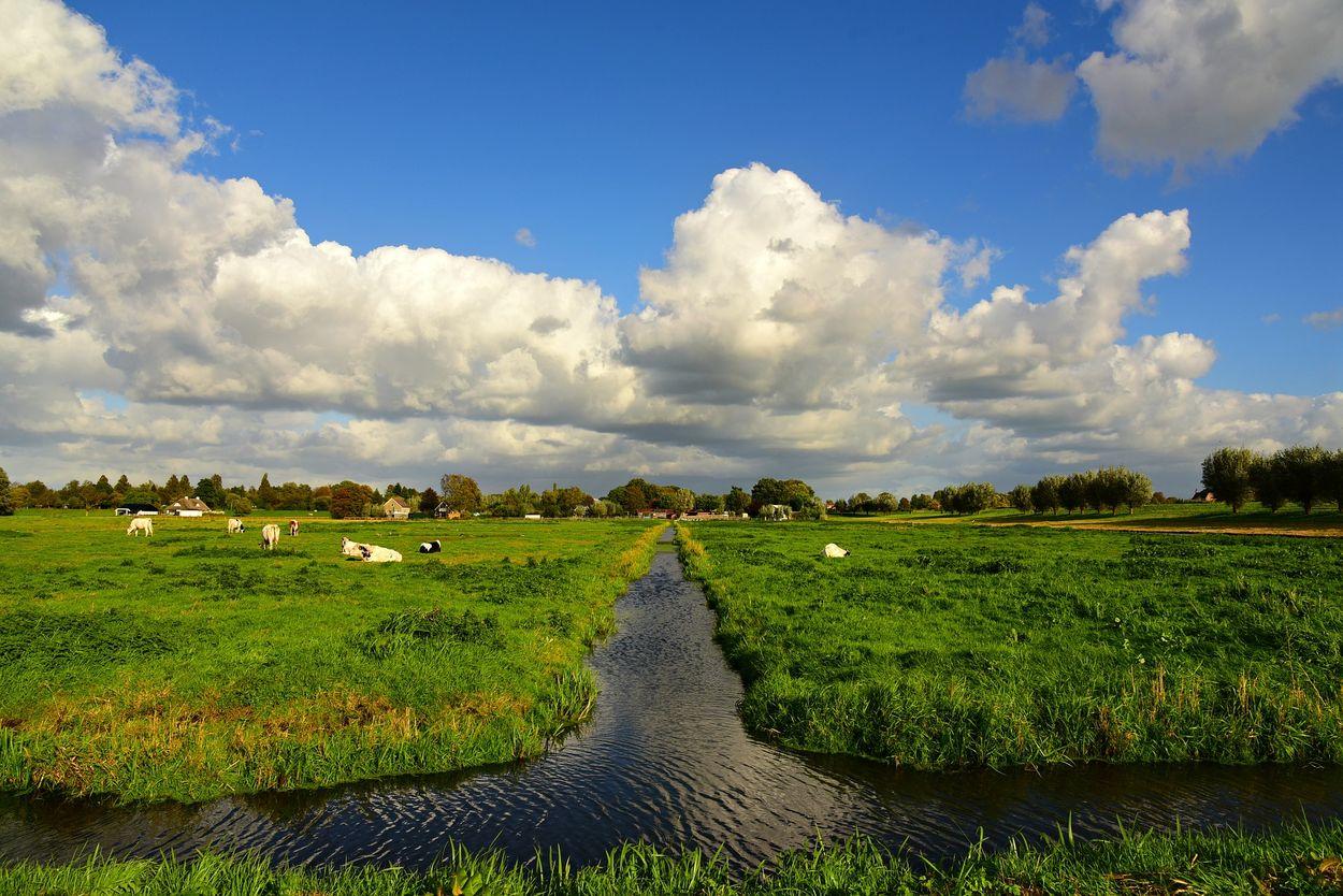 Afbeelding van Waterkwaliteit Nederlandse sloten gedaald