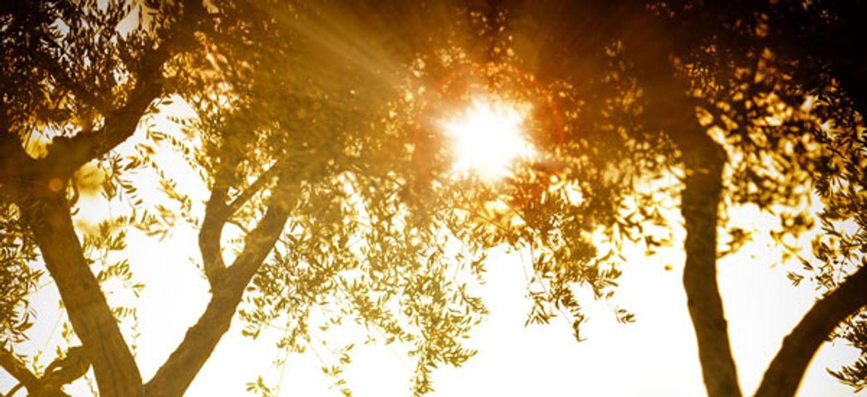 Afbeelding van Betaalbare zonvakanties zijn populair