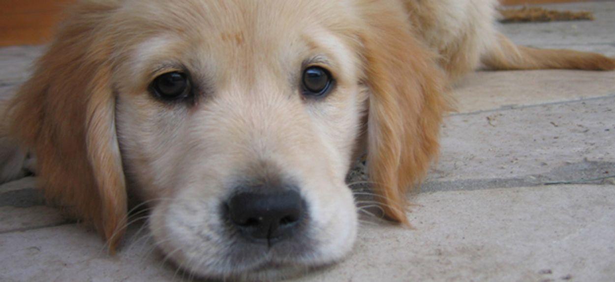 Afbeelding van Weer puppy's uit Bulgarije in beslag genomen