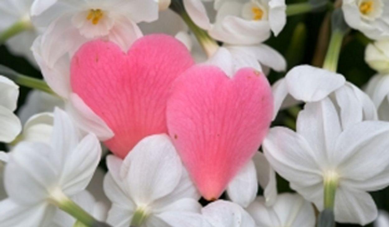 Afbeelding van Valentijnsdag niet omarmd