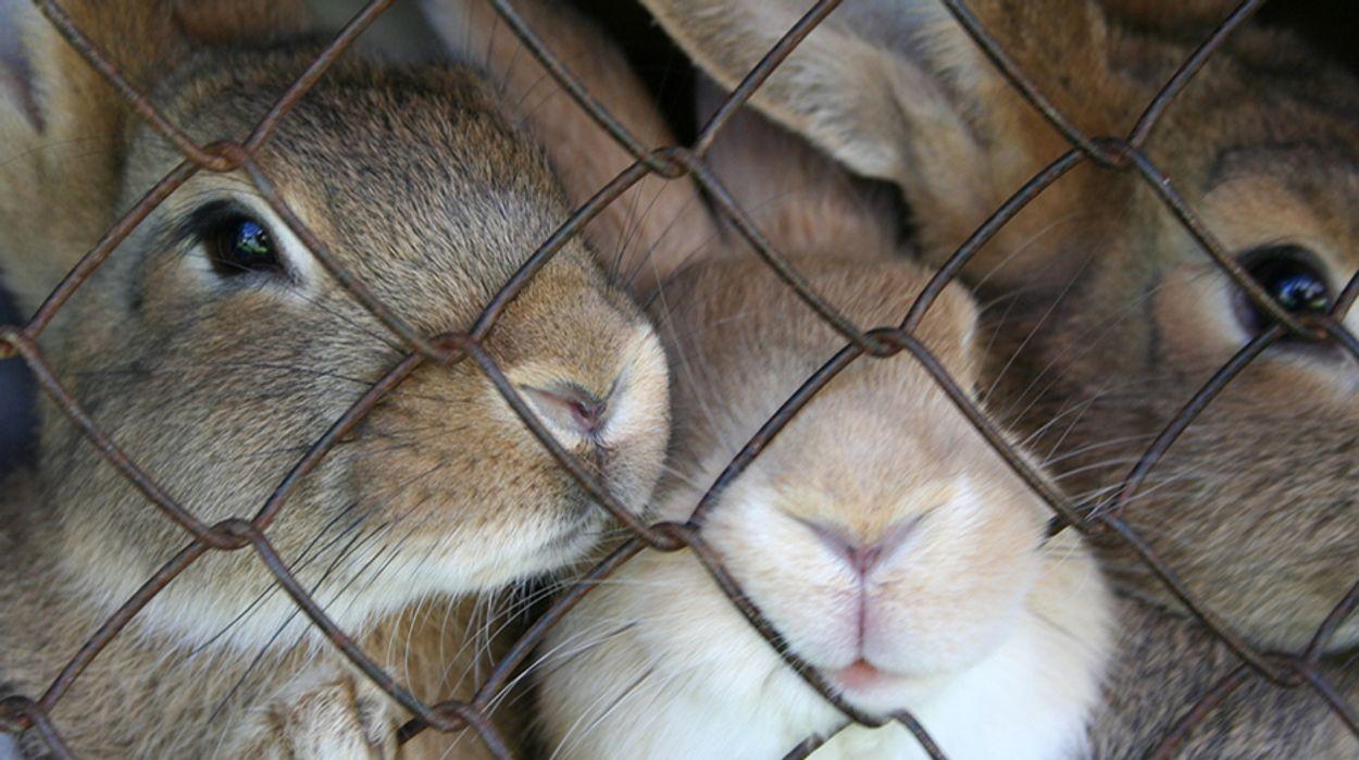 Afbeelding van Unilever steunt verbod dierproeven cosmetica