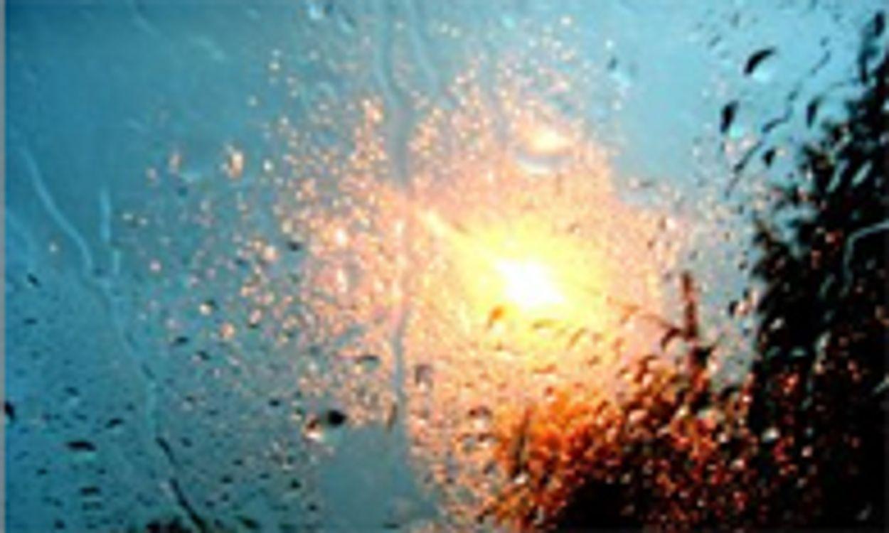 Afbeelding van 'Jaarlijks circa 60 doden door auto te water'