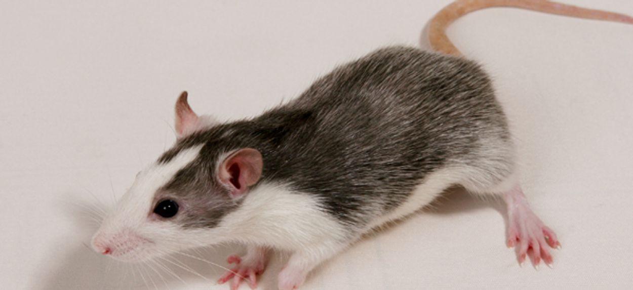 Afbeelding van Op dieren geteste cosmetica in EU verboden