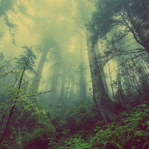 Afbeelding van Steeds minder bos in Nederland