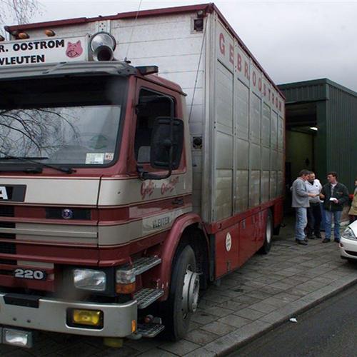 Afbeelding van NVWA: 'Transporteurs moeten aan eisen veetransport voldoen'