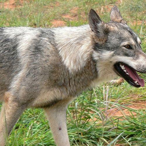 Afbeelding van Toename in meldingen over hondsdolheid