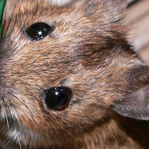 Afbeelding van Plaagdieren rukken op door onhygiënisch gedrag