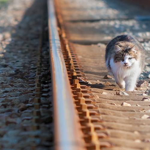 Afbeelding van Minder vaak vertraging door dieren op spoor