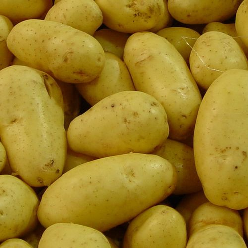 Afbeelding van Bruinrot aangetroffen bij aardappeltelers