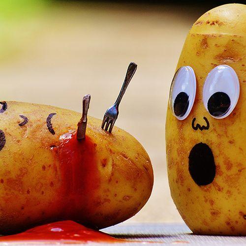 Afbeelding van Krieltjes blijken gewone aardappelen te zijn