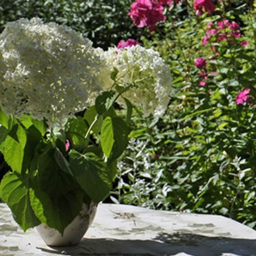 Afbeelding van 'Tuinen in Nederland zijn dood'
