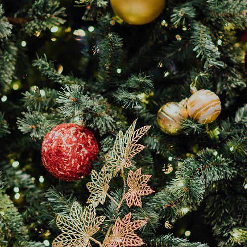 Afbeelding van Kassa's Kerstboomverkiezing 2019